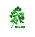 logo coriander farm design vector image