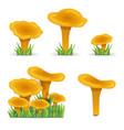 set chanterelles mushrooms vegetabl vector image vector image