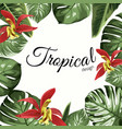 tropical border frame with orchid vector image
