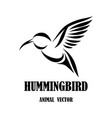 flying hummingbird line art eps 10 vector image vector image