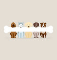 group of dog breeds holding bone vector image