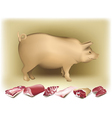 Pig and pork vector | Price: 3 Credits (USD $3)