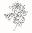 rose flower drawing vector image