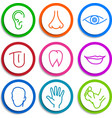 set of icons Human body parts vector image vector image