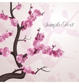 Cherry flowers Card with spring blossom vector image