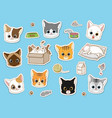 cute cat sticker collection set cartoon doodles vector image