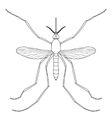 Insect a realistic mosquito Culex pipiens vector image