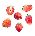 watercolor strawberry set vector image vector image