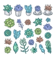 Hand drawn set of succulents Pen graphic vector image