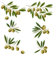 green olive vector image
