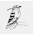 Hand-drawn pencil graphics hoopoe hornbill bird vector image vector image