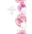peony tulip banner vector image vector image