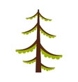 Spruce icon flat style vector image vector image