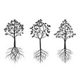 trees with leaves and roots outline vector image vector image