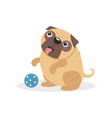 cute pug dog character playing with a ball pet vector image