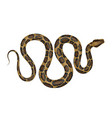 python vector image vector image