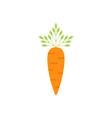 Ripe Carrot Isolated vector image vector image