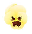 yellow pansy vector image