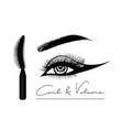 mascara eyeliner and brush stroke beauty vector image vector image