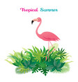 pink flamingo with tropical jungle vector image vector image