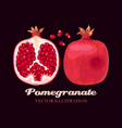 pomegranate fruits vector image vector image
