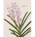painted pink orchids vector image