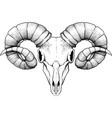 black ram skull vector image