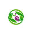 fruit farm foundation vector image vector image