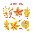 autumn leaves collection vector image vector image
