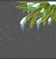 border with relistic firtree snow and icicles vector image