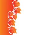 Floral background or decorative design vector image vector image