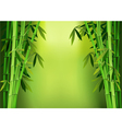 stalks bamboo vector image vector image