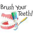 Brush your teeth with toothbrush and paste vector image vector image