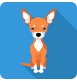 dog Chihuahua icon flat design vector image vector image