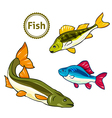 fishes Perch salmon vector image vector image