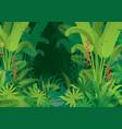 tropical jungle dark background vector image vector image