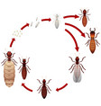 a termite life cycle vector image vector image