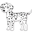 cartoon cute dalmatian dog isolated on white backg vector image vector image