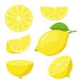 lemon slices citrus fruit slice juicy yellow vector image vector image