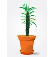 Pachypodium cactus in pot vector image vector image