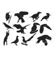 bird silhouette hawk eagle owl parrot toucan vector image