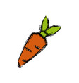 carrot vegetable draw vector image