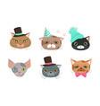 cute cartoon cats muzzle set animal heads vector image vector image