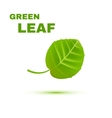 Green Leaf isolated on white background vector image vector image