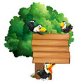 wooden sign with three toucan birds vector image vector image
