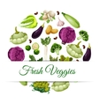 Banner for organic and natural vegetable food vector image vector image