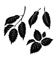 Elm Leaves Pictogram Set vector image vector image