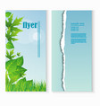flyer template with fresh green leaves and grass vector image vector image