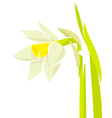 Narcissus flower vector image vector image