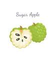 sugar-apple sweetsop custard apple isolated icon vector image vector image